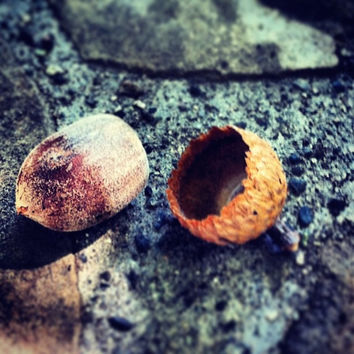 Acorn | Fine Art Photography | Nature Photography | Garden Image | Sunlight | Autumn Decor | Wall Decor