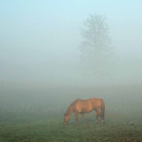 Horse in the Fog 8x10 Fine Art Photography by laughlovephoto