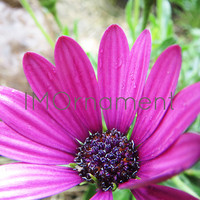 Pink Flower Printable. Photo Download. 8x8. Pink Wall Art. Photo Art Print. Instant Download