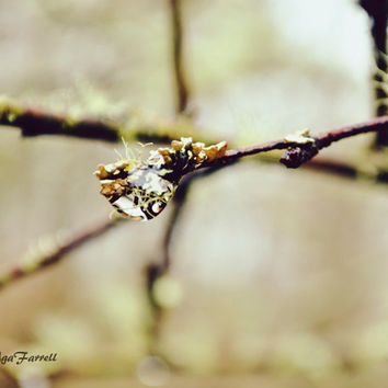 Raindrop on Twig Photography, Nature Photo, Woodland Branches, Moss, Twig Art, Nature Print, Sage Green, Brown - Little Universe