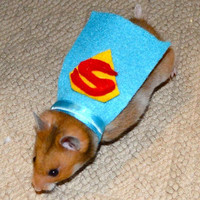Superman hamster costume. Hamster / pet Halloween costumes by la Marmota Café.