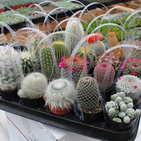 "3 Awesome Cactus For Sale in their 2.5"" round containers All are labled with names succulents succulent"