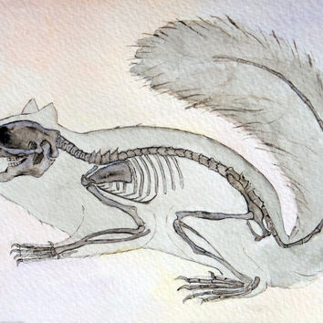 Squirrel, skeleton, anatomy art, watercolor painting, anatomy, art, drawing, picture