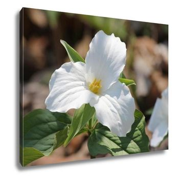 Gallery Wrapped Canvas, Trillium Grandiflorumwhite