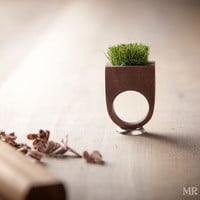 Wood Grass Planter Ring, Garden Ring, Plant Ring 009