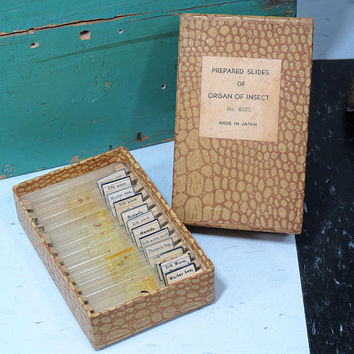 Vintage Box of Prepared Slides for Microscope . Organ of Insect Made in Japan . 12 Glass Slides Insect Parts