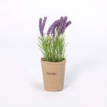 PURPLE LAVENDER  IN NATURAL POT