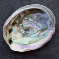 SMALL ABALONE SHELL - Offering Dish to Burn White Sage Smudge, Palo Santo Sticks or Incense