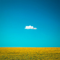 "Nature Photography ""The Happy One"" Lone Cloud, One Cloud, Blue Sky, Yellow Sunflower Field, Summer Home Wall Decor 6x6 Fine Art Photo Print"