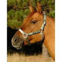 "Hamilton 1"" Nylon Horse Halter with Brushed Hardware (800 to 1100 lb. Horse), Gold, (B 1D AVGD), Average"