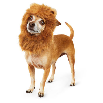 Petco Halloween Lion's Mane Dog Costume