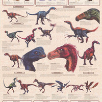 Feathered Dinosaurs Education Poster 24x36