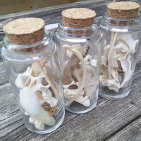Large Bottles of Bones and teeth, Raccoon opossum buffalo teeth, vertebrae deer teeth, oddities curiosities taxidermy witchcraft wicca Altar
