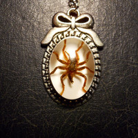 Sweet Bow Ghost Spider Specimen in Resin Cameo Necklace