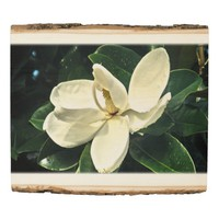 White Magnolia Flower with Water Droplets Wood Panel