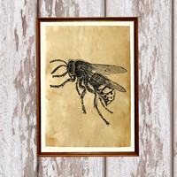 Bee print  Antique art Insect decor Cabin poster AK227