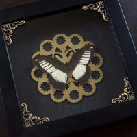 Black & White Butterfly Display