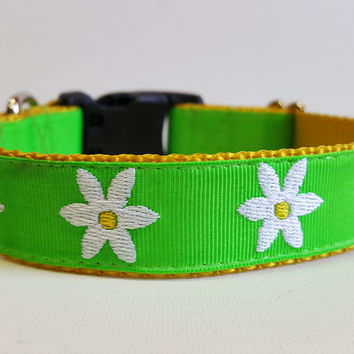 Daisy Embroidered Dog Collar