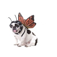 Butterfly Dog Costume (Small,Multicolor)