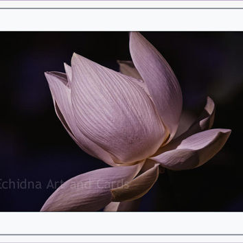 Artistic Photography, Living Room Decor, Pink Lotus Flower, Floral Art Print