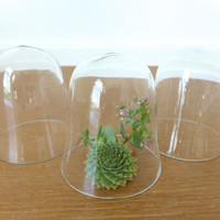 Three small glass cloches, display domes
