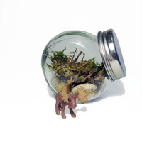 Recycled Moose Jar Terrarium