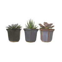 3 Succulent Plant Combination In Hexagon Shaped Ceramic Planters Wedding Party Favors Gifts