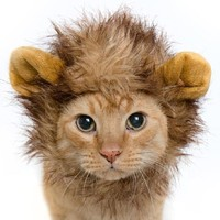 Lion Mane Wig Cat Costume and Small Dog Costume with Complimentary Feathered Catnip Toy - Pet Costumes by Pet Krewe