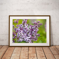 Lilac Flowers, Flower Photography, Lilac Wall Art, Lilacs, Nature Photography, Floral Prints, 8x10 Print, 10x15 Wall Art, Lilac Decor