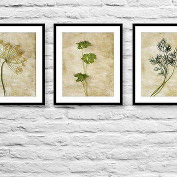 Nature photography still life photography food art gift set collection of 3 wall decor prints kitchen decor herbs rustic art prints