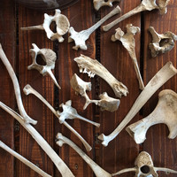 Assorted Natural Bones