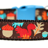 "Squirrel Dog Collar 1"" Fall Dog Collar"