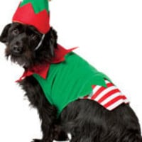 Pets Christmas Elf Costume