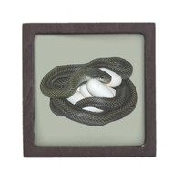 Japanese Rat Snake, beautifull and caring mother! Premium Trinket Boxes