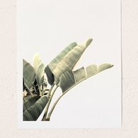 Wilder California Beverly Hills Banana Tree Art Print | Urban Outfitters