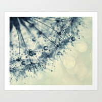 dandelion Art Print by ingz