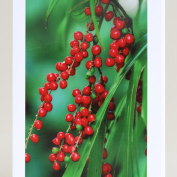 SALE Australian Christmas Card, Botanical Photography Print, Nature Lovers