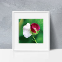 Pea Flower photography Print. Floral photography print. Colorful flower photography print. Home wall art Apartment wall art, gifts for mom
