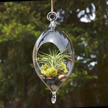 Raindrop Glass Terrarium Air Plant Home Decor, 7-inch w/ Hook