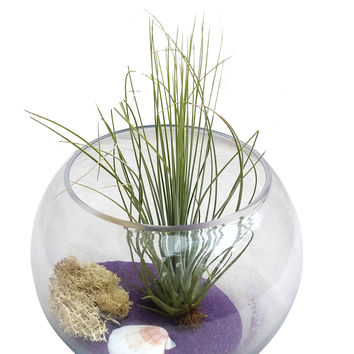 Purple Airplant Terrarium Bowl