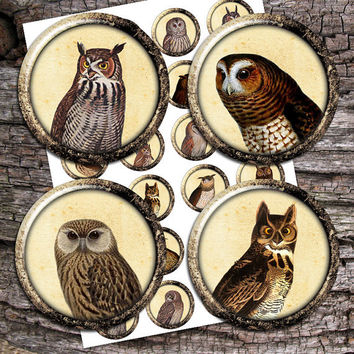 Owls Vintage illustration 1inch, 20mm, 35mm images for Bottle caps, Glass Pendants Digital Collage Sheet