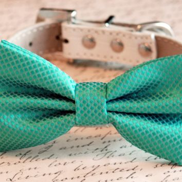 Aqua bow tie attached to collar, Chic, Pet Wedding, Wedding Accessories
