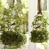 Live Ivy Bird Cage | Pottery Barn