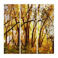 Tangled Woods in Golden Autumn Glory Triptych