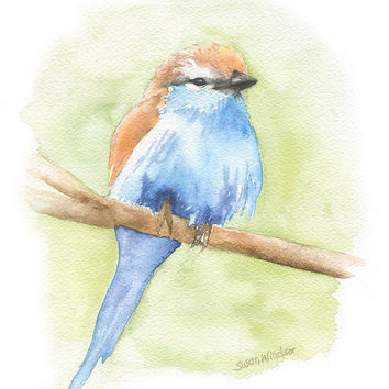 Racket-tailed Roller Watercolor