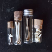 Field and meadow animal bones in vintage vials. Natural history curiosities.