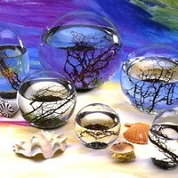 EcoSphere Self-Contained Underwater Ecosystems