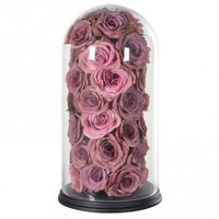 Pink Roses In Dome Display