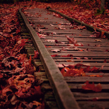 Fall Foliage, Photo, Autumn, Forest, Railroad Track, Photography Print, Red Home Decor, Large Wall Art, Nature Home Decor, Maple Leaves