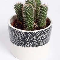 Young in the Mountain Votex Planter | Gorgeous Gifts